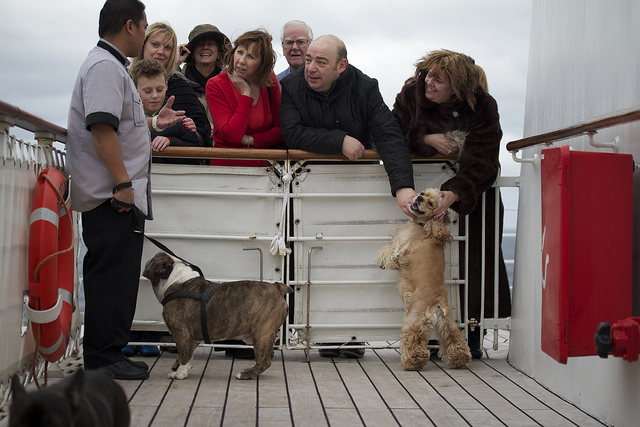 Queen Mary2 Dogs
