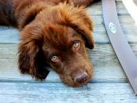クルーズ中のペット、盲導犬・介助犬・介護犬について