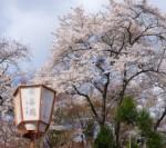 2016年4月 飛鳥2 春のチャータークルーズで京都・奈良・伊勢志摩の桜花見9コース クラブツーリズム特別企画 横浜・神戸発