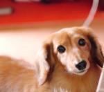 愛犬・愛猫 ペットの預け先に困っている方はペットシッターを紹介する「Pet Keeper」で安心クルーズを